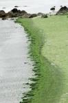 algues.jpg
